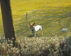 Savic ohrádka Dog Park
