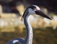 Pontec Heron