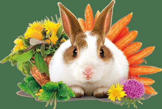 Brit hrana za odrasle zajce Complete, 3 kg