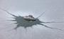12 - Pontec odmrażacz IceFree Thermo 200