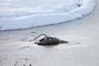 15 - Pontec odmrażacz IceFree Thermo 200