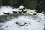 3 - Pontec plovec proti zamrzovanju ribnika PondoPolar (36825)