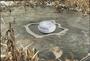 4 - Pontec plovec proti zamrzovanju ribnika PondoPolar (36825)