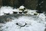 6 - Pontec plovec proti zamrzovanju ribnika PondoPolar (36825)