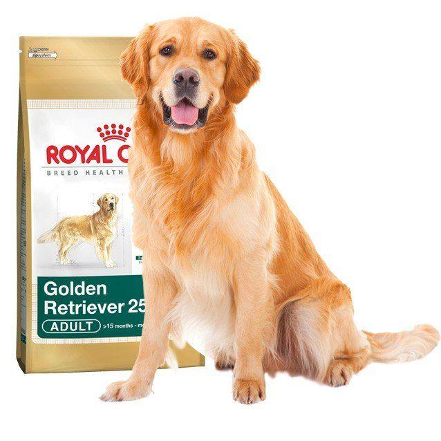 royal canin golden retriever 25 kutyat p 12kg mall hu. Black Bedroom Furniture Sets. Home Design Ideas