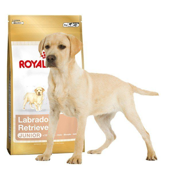 royal canin labrador retriever 33 junior kutyat p 12kg mall hu. Black Bedroom Furniture Sets. Home Design Ideas