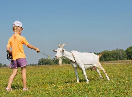 Poukaz Allegria - vlastnoruční výroba sýru pro celou rodinu