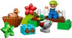 LEGO® DUPLO 10581 Divoké kachny