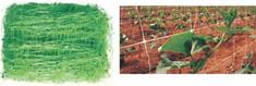 PVC oporna mreža za rastline vzpenjalke, 2x100m