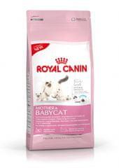 Royal Canin sucha karma dla kota Babycat 34 - 4 kg