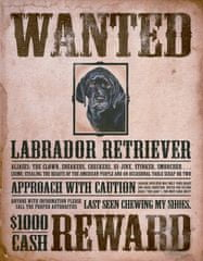 Postershop Metalowa tabliczka Black Lab - Wanted