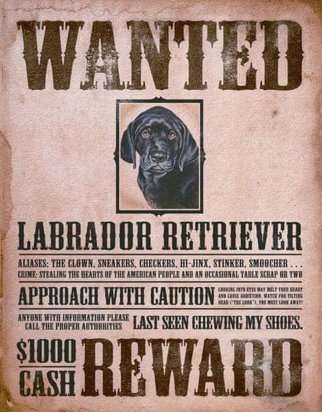 Postershop Plechová cedule Hledá se černý pes