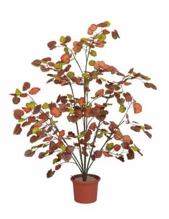 EverGreen Breza višina 120 cm v cvetličnem loncu