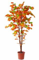 EverGreen Kanadski javor v cvetličnem loncu, 180 cm