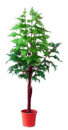 EverGreen Havajsko drevo v cvetličnem loncu, 180 cm