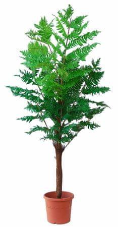 EverGreen havajsko drevo v cvetličnem loncu, 210 cm