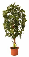 EverGreen Schefflera strom výška 110 cm v kvetináči, zelená