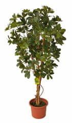 EverGreen Sztuczna szeflera o wysokości 140 cm w doniczce, zielona