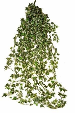EverGreen Sztuczny bluszcz holenderski o długości 180 cm