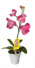 EverGreen Orchidea v květináči výška 35 cm, růžová