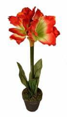 EverGreen Amarylis v květináči výška 60 cm, červeno-krémová