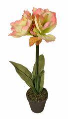 EverGreen Amarylis v květináči výška 60 cm, krémovo-růžová