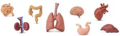 Safari Ltd. Tuba - Ľudské orgány