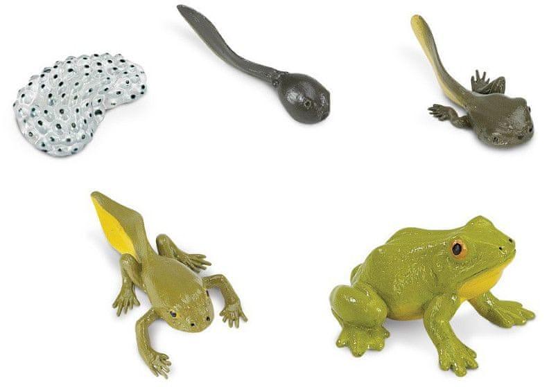 Safari Ltd. Životní cyklus - Žába