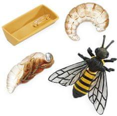 Safari Ltd. Životný cyklus - Včela