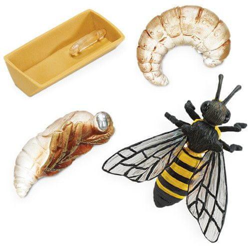 Safari Ltd. Životní cyklus - Včela