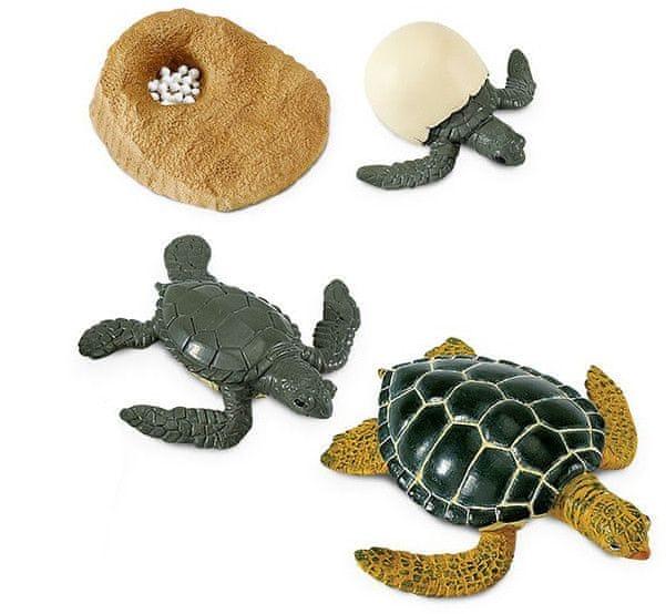 Safari Ltd. Životní cyklus - Mořská želva
