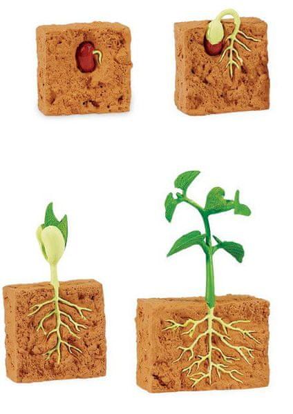 Safari Ltd. Životní cyklus - Zelená fazole