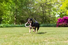 Beco Gumikarika kutyáknak, L