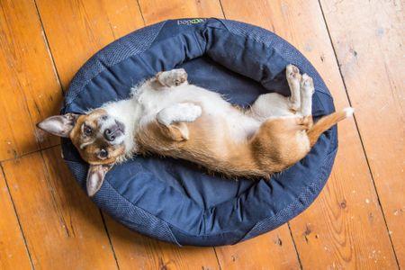 Beco extra majhno pasje ležišče, modra