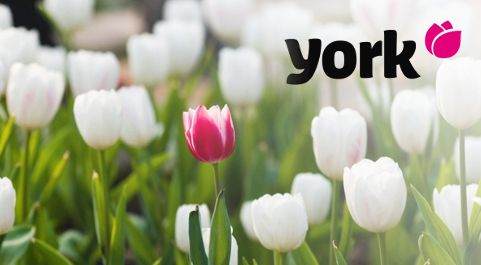 York Mop Top houbový