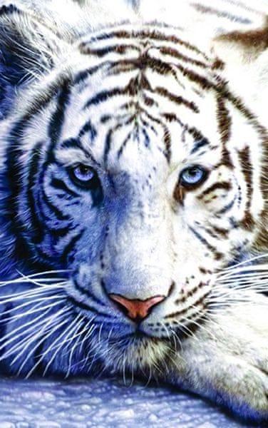 Postershop Fotoobraz Bílý tygr 81x51 cm