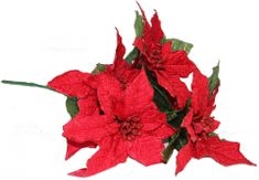 Seizis Poinsettia červená 45 cm