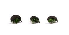 Nash Brouk Zig Bugs Black Louse Micro Barbed 3 ks