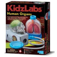 4M set Spoznavanje človeških organov