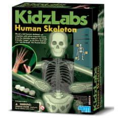 4M set Človeški skelet