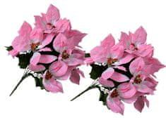 EverGreen Poinsettia veľkokvetá 2 ks ružová