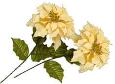 EverGreen Poinsettia veľkokvetá 2 ks krémová