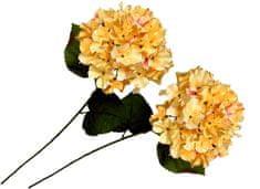 EverGreen Hortensie velkokvětá 2 ks krémová