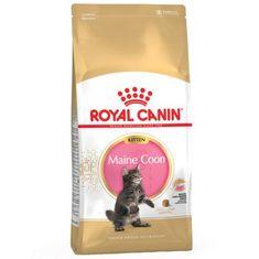 Royal Canin Kitten Maine Coon macskaeledel - 10 kg