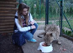 Poukaz Allegria - krmení geparda, ocelotů a rysů