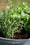 2 - HomeOgarden organsko gnojilo Organsko dognojevanje, 0,75 l