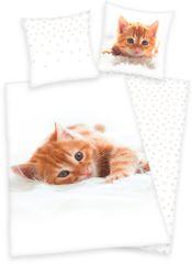 Herding posteljnina Kittens
