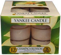 Yankee Candle Čajové svíčky Champaca Blossom 12x 9,8 g