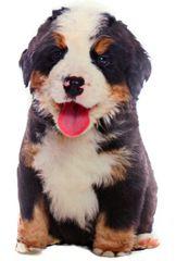Lamps Vankúšik 36 x 20 cm salašnícky pes