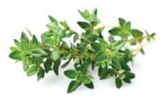 Click and Grow náplň pro smart květináče a farmy - Tymián, 3ks v balení